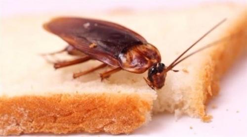 تسويق خبز بالحشرات في فنلندا
