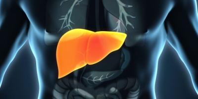 ما العلاقة بين مرض الكبد الدهني وضمور المخ ؟