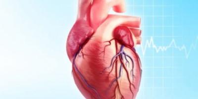 إعرف جسمك.. الشريان التاجى.. هكذا تدور رحلة توزيع الدم فى قلبك