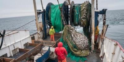 لماذا يعتبر الصيد بالصعق الكهربائي أمرا مخيفا؟