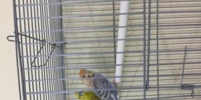 تطلب الخلع بسبب خوف زوجها من الطيور