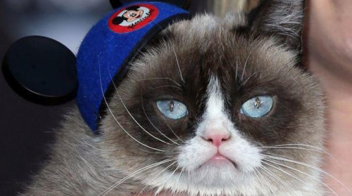 قط يحقق 500 الف جنية استرليني بسبب وجهه العابس