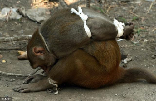 عشرات القردة تهاجم سكان قرية بحضرموت انتقاماً لمقتل عدد منهم