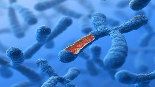 تجربة التعديل الوراثي البشري للمرة الأولى في أوروبا