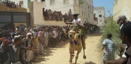 مالكو الجمال يتفننون بحنائها في سباق للهجن شرق اليمن