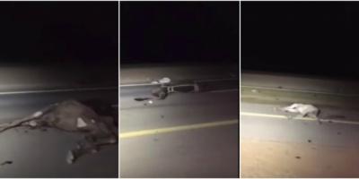 حادث مروع بالسعودية يودي بحياة يمنيَيْن ونفوق 14 رأسًا من الإبل