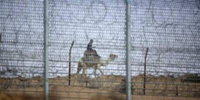 """إرهابيو سيناء يلجأون لـ""""الجمال"""" هربا من الجيش"""