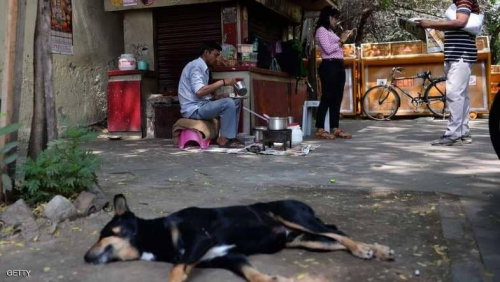 مجزرة كلاب متوحشة تقتل 6 أطفال