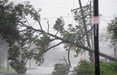 """شجرة تنهي حياة مذيع ومصور يغطيان """"عاصفة"""" بنورث كارولاينا"""