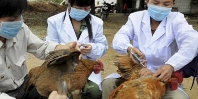 مسؤول بريطاني يحذر من تحول إنفلونزا صينية لوباء عالمي