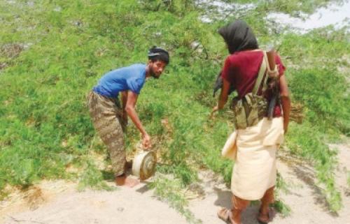الحوثيون يزرعون الألغام بعشوائية للانتقام من المدنيين