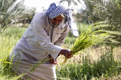 شحة المياه في العراق تنذر بعواقب اقتصادية وديموغرافية