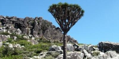 أرخبيل سقطرى .. موقع التراث العالمي الأكثر غرابة على وجه الأرض في 7 معلومات