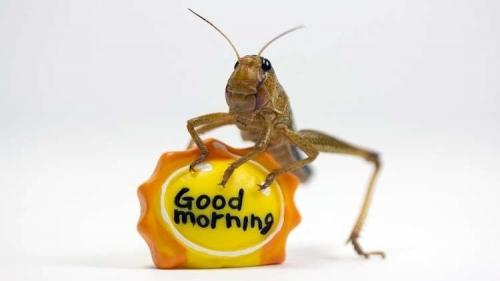 اكتشاف فائدة صحية غير متوقعة للصراصير!