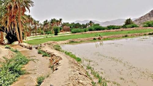 الأرصاد: أمطار رعدية من صعدة إلى لحج