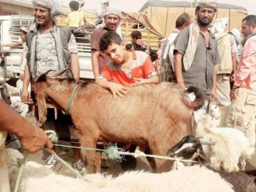 مسجلاً رقماً قياسياً..  تيس أضحية للعيد بربع مليون ريال  ( صورة )