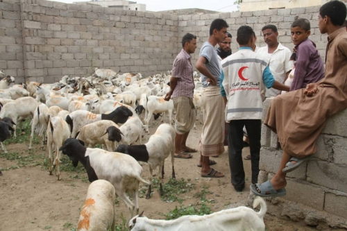 صور.. الهلال الأحمر الإماراتي يوزع  اضاحي العيد على سكان الخوخة وحيس