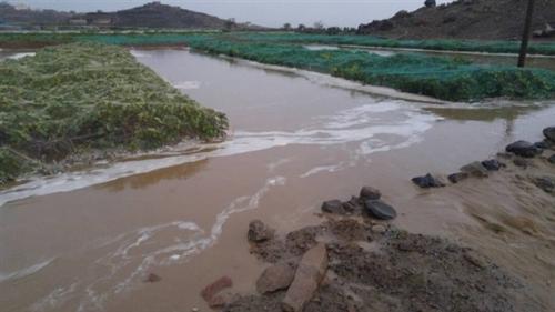 شاهد ماذا فعلت الأمطار بالأراضي الزراعية في اب؟
