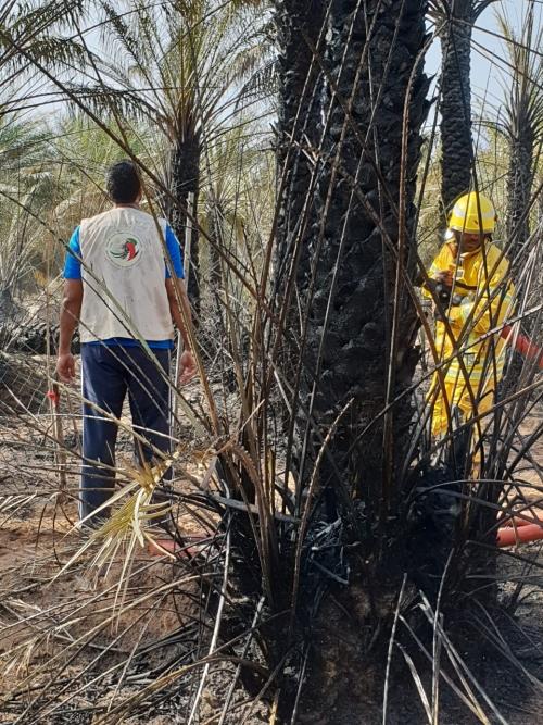 شاهد.. الإمارات تنقذ سقطرى بعد حريق يلتهم أشجار النخيل بوادي حديبو