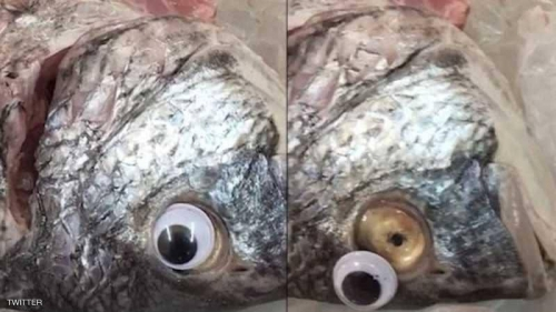 """سمك """"العدسات اللاصقة"""" يثير ضجة بالكويت.. والشرطة تتحرك"""