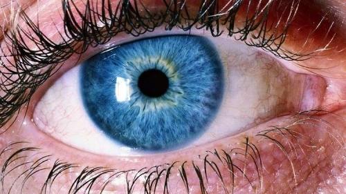 علماء يحذرون من زهري العيون المؤدي لفقدان البصر