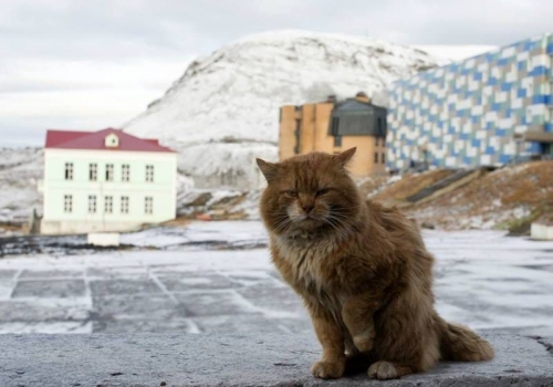 """""""كاشا"""".. القطة الوحيدة في هذه الجزيرة """"صور"""""""