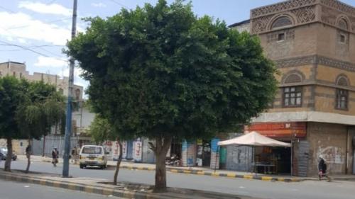شاب يمني يسكن فوق شجرة .. لهذا السبب