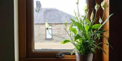دراسة: النباتات المنزلية تخفض مستويات التوتر وتحسن المزاج