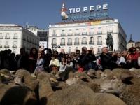 بالصور.. الأغنام تغزو شوارع مدريد الإسبانية