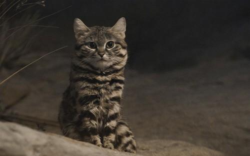 بالصور.. تعرف على الحيوان الأكثر شراسة في العالم