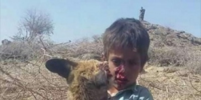 شاهد.. طفل يمني يعارك حيواناً مفترساً ويقتله خنقاً