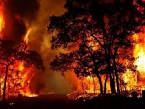 حريق الغابات تطارد مشاهير كاليفورنيا بمنازلهم