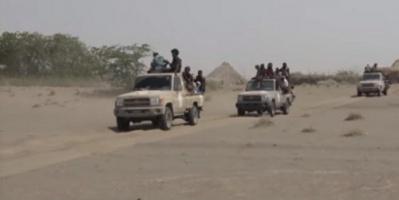 العمالقة تطهر عدداً من المزارع في الحديدة (فيديو)