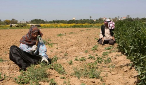 الاحتلال الإسرائيلي يطلق النار على مزارعين بغزة