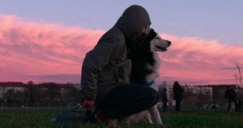"""تفاصيل مسلسل نتفليكس """"Dogs"""""""