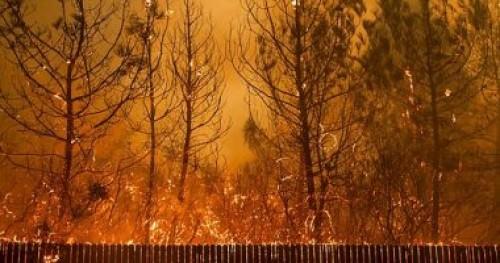 ارتفاع عدد ضحايا حرائق الغابات فى ولاية كاليفورنيا الأمريكية لـ80 قتيلا