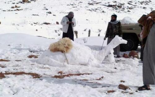لقطات طريفة.. كيف استغل السعوديون الجليد؟ «فيديو»