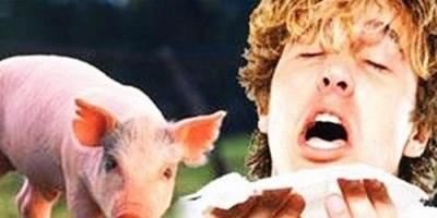 الصين ترصد بؤر جديدة لحمى الخنازير الأفريقية