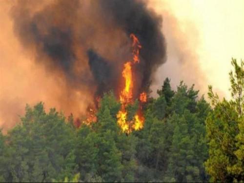 إنقاذ 10 أشخاص من حرائق غابات أستراليا