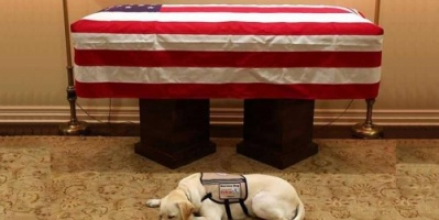 الكلب الوفي لجورج بوش الأب بعد رحيله
