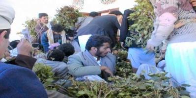 بائعو القات فريسة للعصابات في عدن