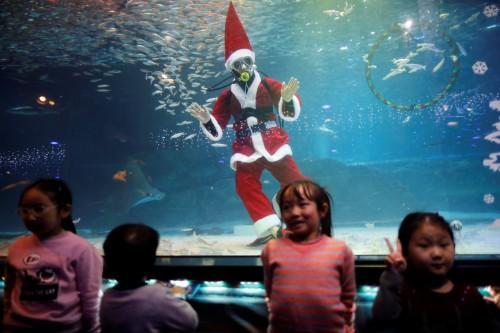 احتفالات بالكريسماس مع الأسماك تحت الماء فى سول