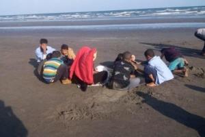 """تقرير هام من هيئة أبحاث علوم البحار بشأن""""قنديل البحر"""" في ساحل أبين..  صور"""