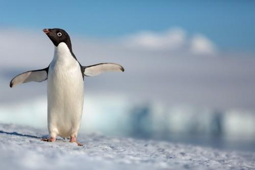 شركة ديزني تطرح الإعلان الأول للفيلم الوثائقي Penguins