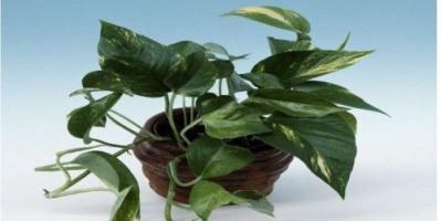 """""""فلتر نباتي"""" لتنقية الهواء من المواد المسرطنة"""