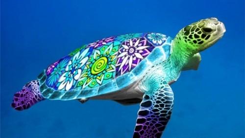 دعوات لحماية السلاحف البحرية من القتل في عدن