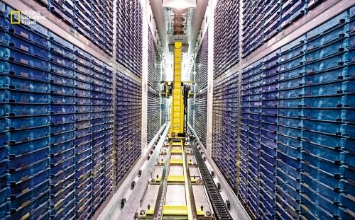 صورة توضح طريقة تخزين البنك البيولوجي البريطاني لعينات الدم