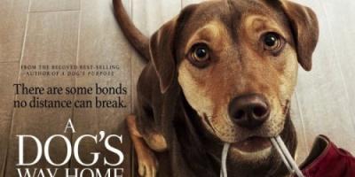 بعد 3 أيام.. فيلم A Dog's Way Home يحصد 12 مليون دولار
