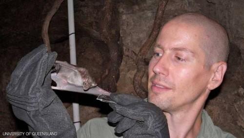 دراسة: قريبًا سم الخفاش لعلاج أمراض بشرية خطيرة