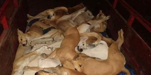 حملتان لتسميم الكلاب الضالة والرش الضبابي للبعوض في الشحر (صور)